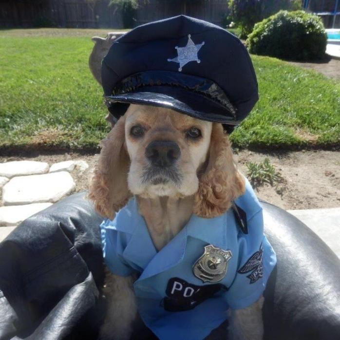 Molly the cop