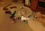 Colton & toys