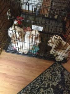 3 puppies