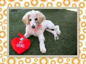 HOLLY - ID#A1363027