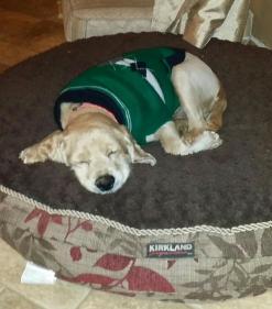 Baxter2